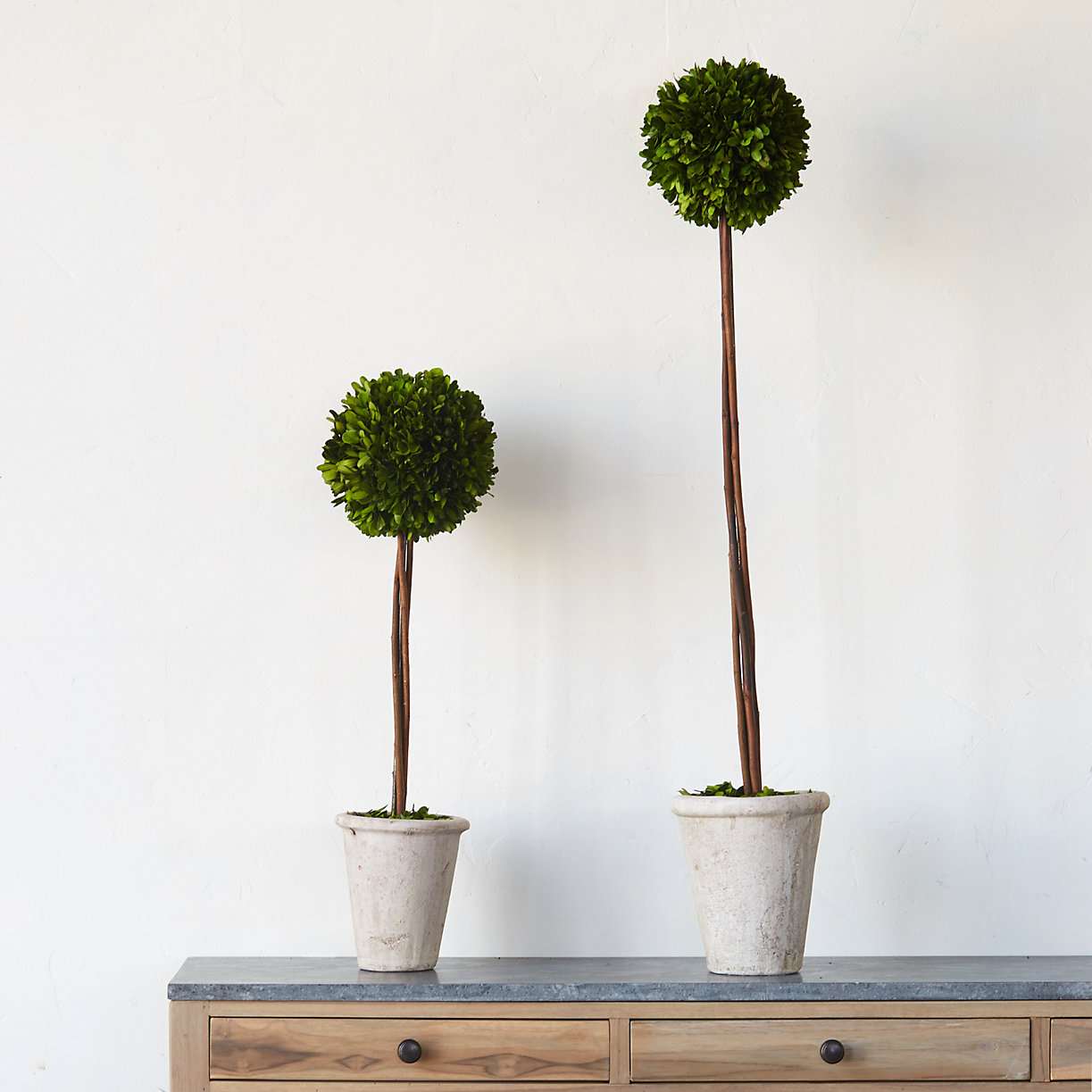 Boxwood topiaries from Terrain