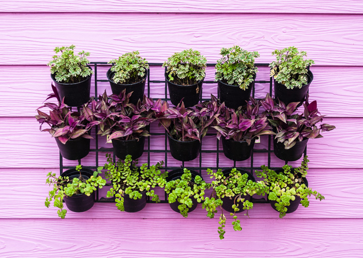 Colorful wall with a vertical garden