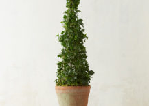 Cone topiary from Terrain