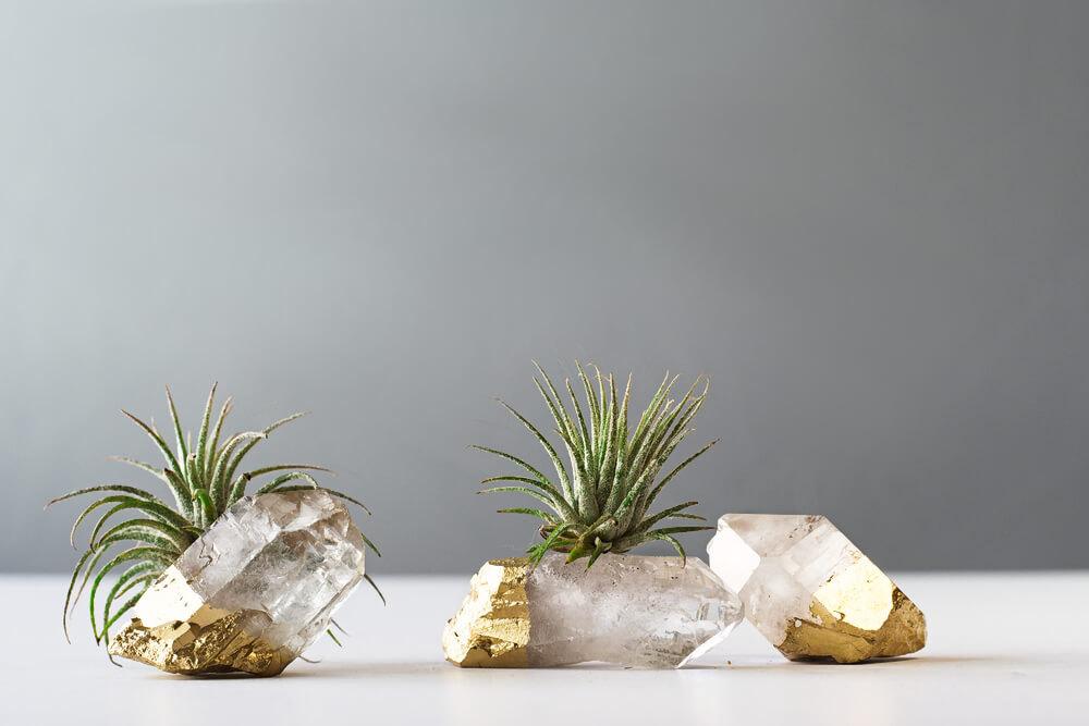 Crystal air plant garden from Air Friend