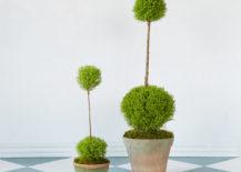 Double topiaries from Terrain