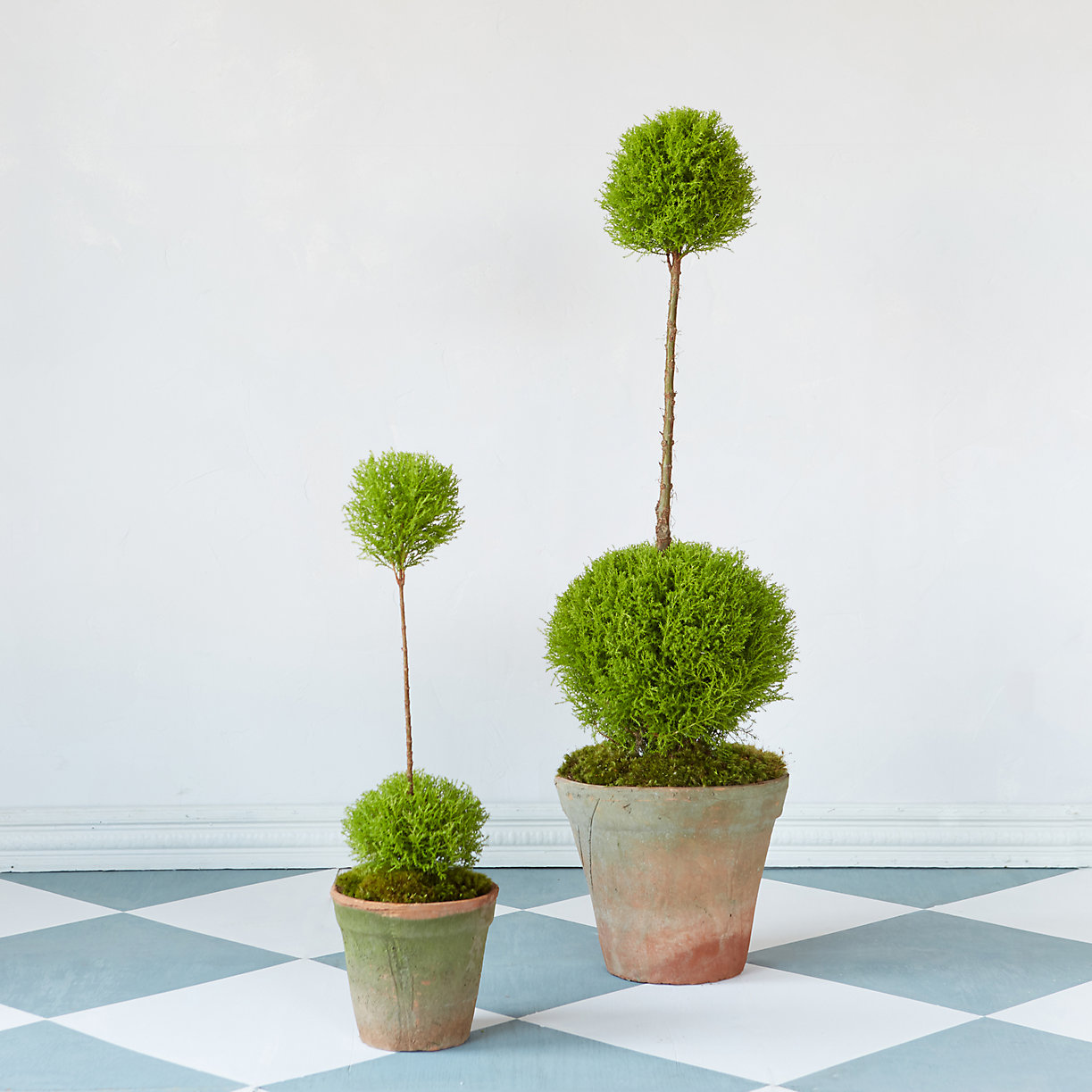 Double topiaries from Terrain