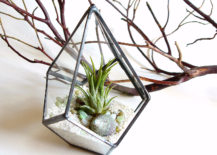 Geo air plant terrarium from Jechory Glass Designs