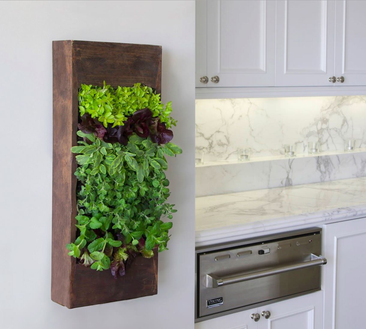 Kitchen with an herb living wall