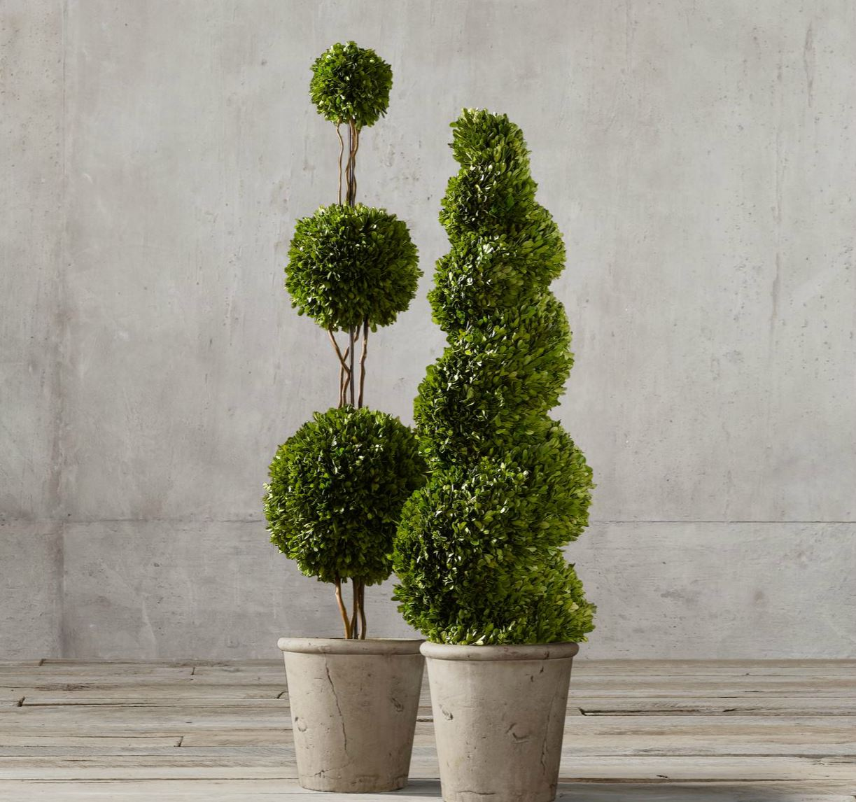 Preserved boxwood topiaries from Restoration Hardware