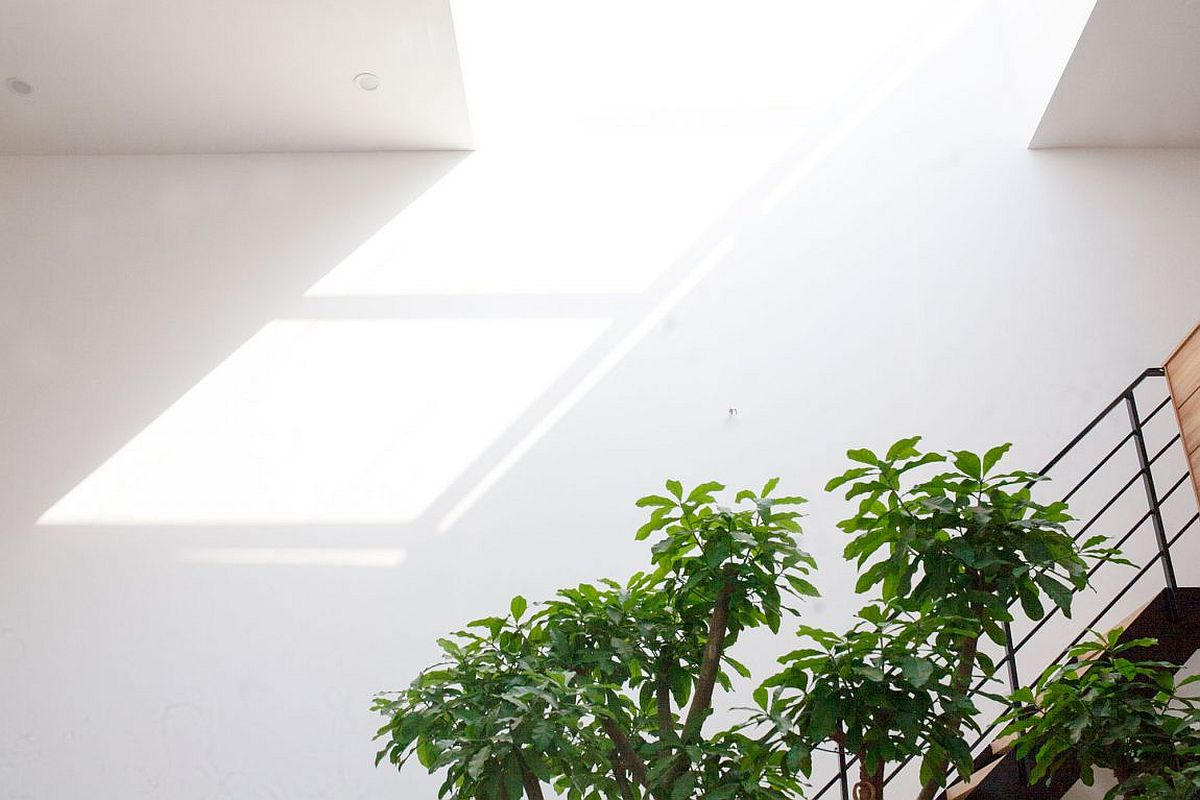 Skylight brings ample natural light into the lower level living area