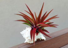 Tillandsia-Abdita-from-Etsy-shop-Air-Plant-Studio-217x155