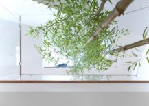 Indoor bamboo garden at the modern residence in Vancouver