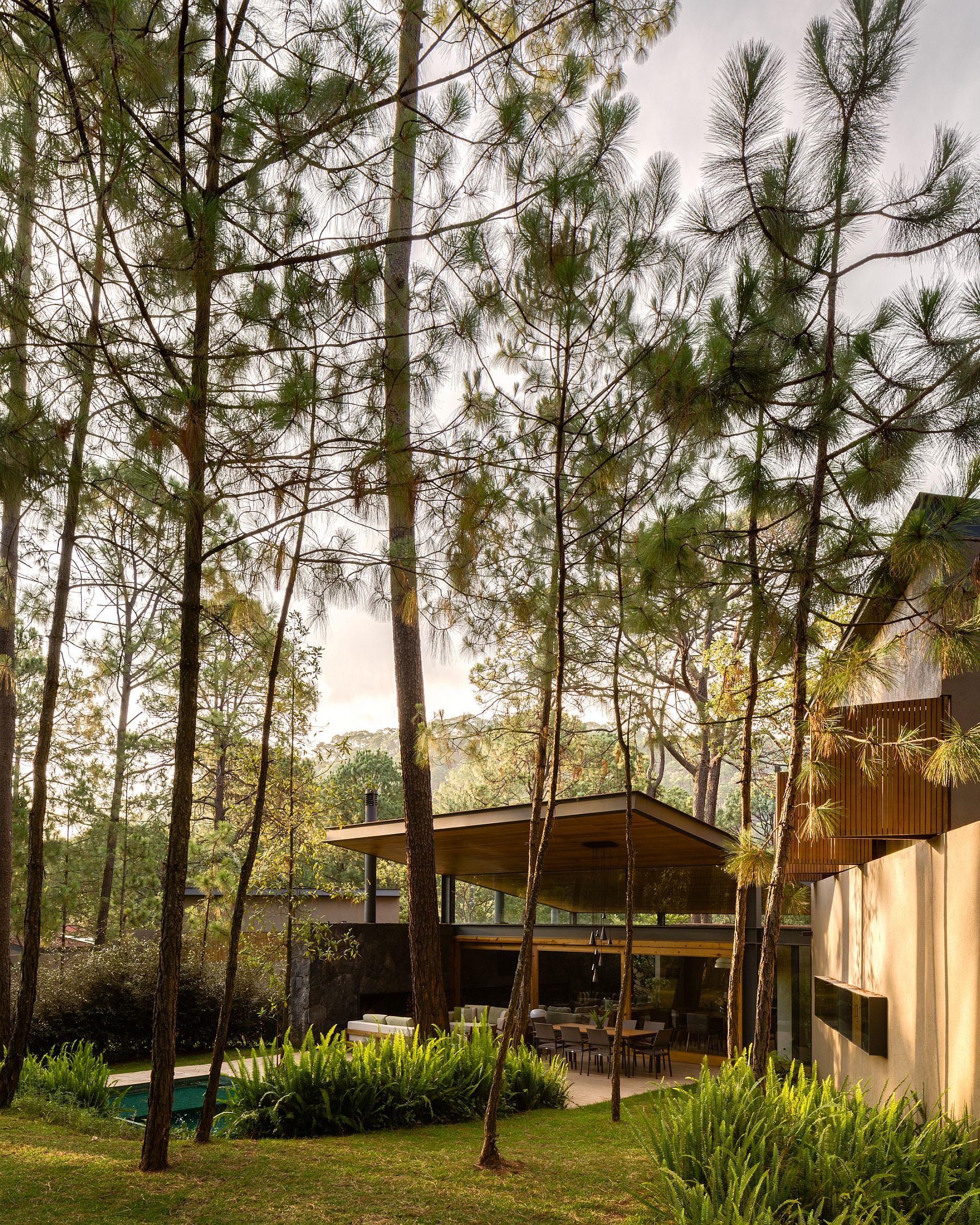 Tall trees and forest landscape surround the Five Houses in Mexico