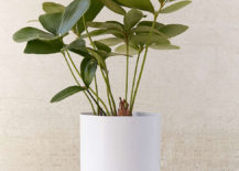 Small metal planter from Urban Outfitters 217x155 The Art of Gifting