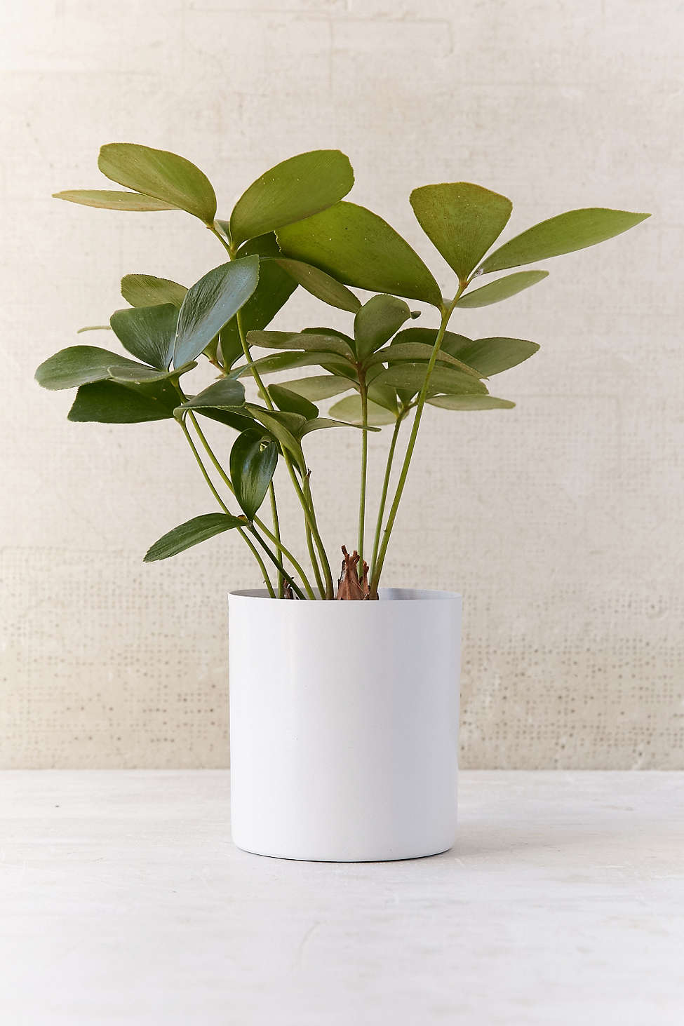 Small metal planter from Urban Outfitters