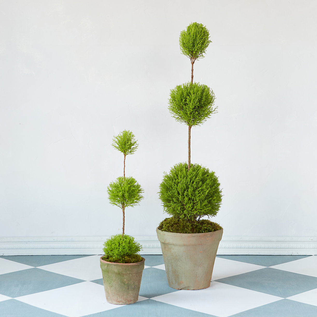 Topiaries from Terrain