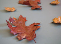 Copper fall leaves