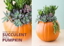 DIY succulent pumpkin centerpiece [From: succulents and sunshine]