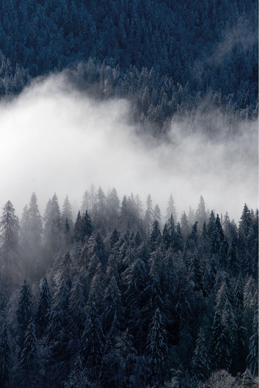 Skog (forest).Image© 2016SKANDINAVISK.