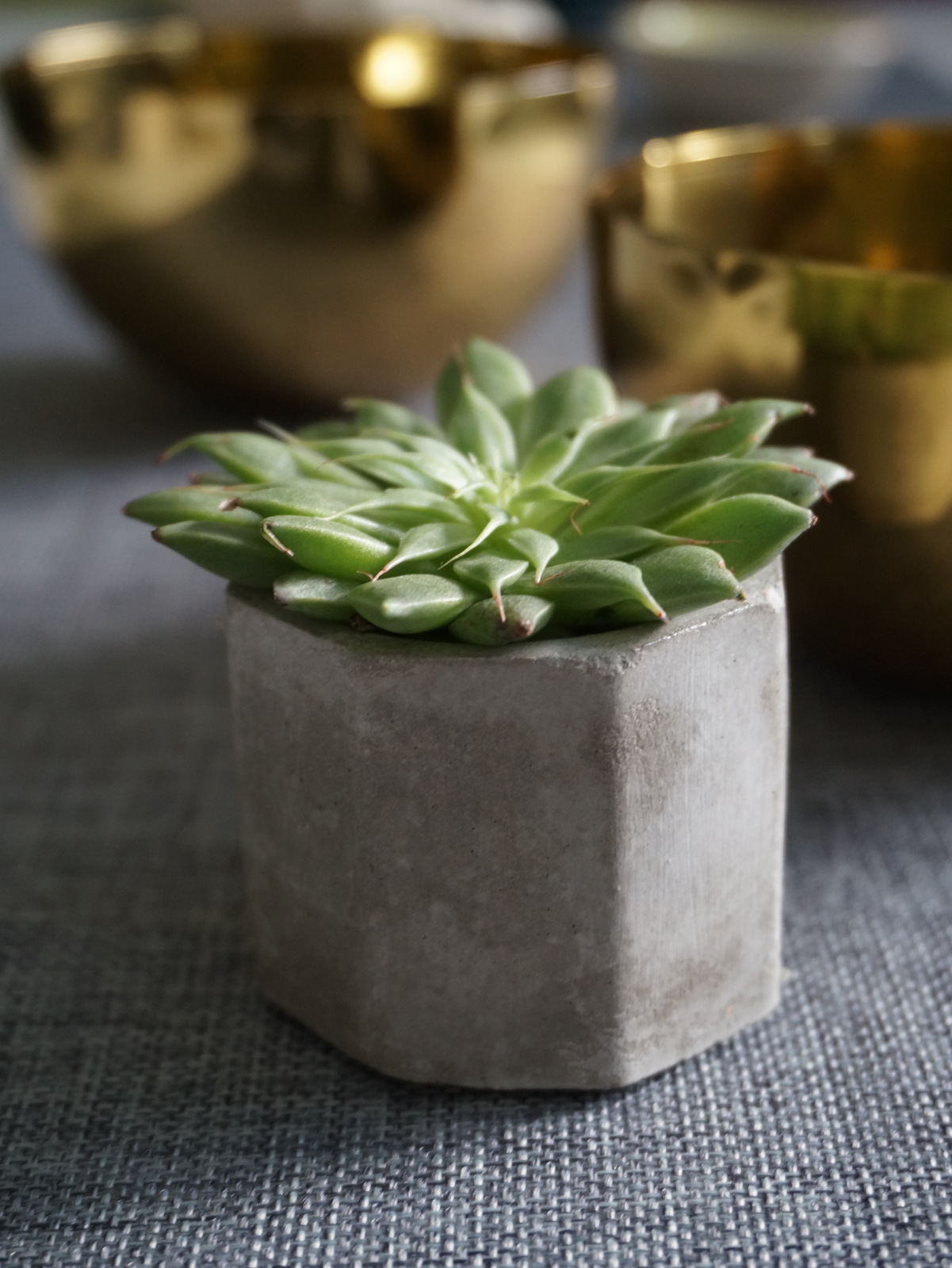 Potted succulents make fabulous favors