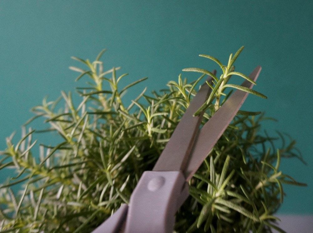 Trim your topiary
