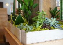 Wooden planters celebrate indoor greenery