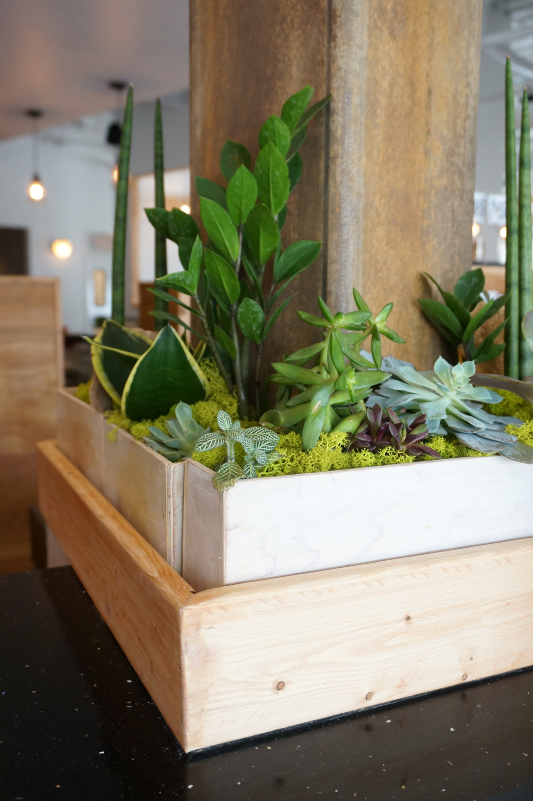 Wooden planters celebrate indoor greenery