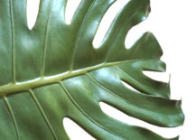 A-faux-monstera-leaf-217x155