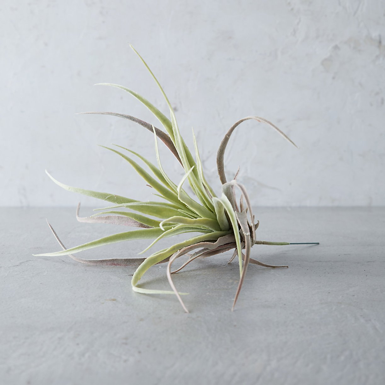 Faux air plant from Terrain