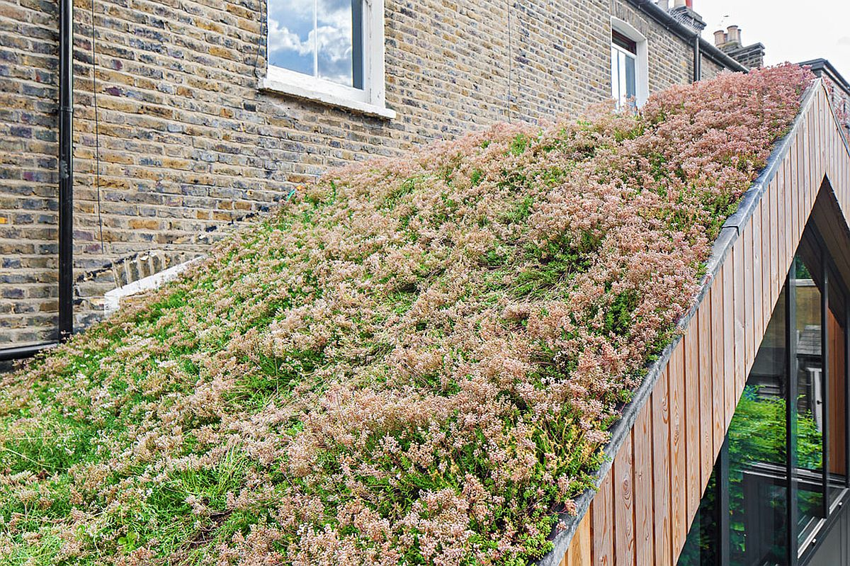 Green roof of the new extension of the London home helps regulate the temperature inside