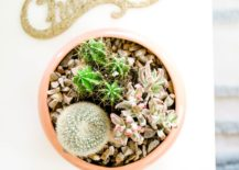Potted succulents from Proper 217x155 Gift Ideas for the Nature Lover in Your Life
