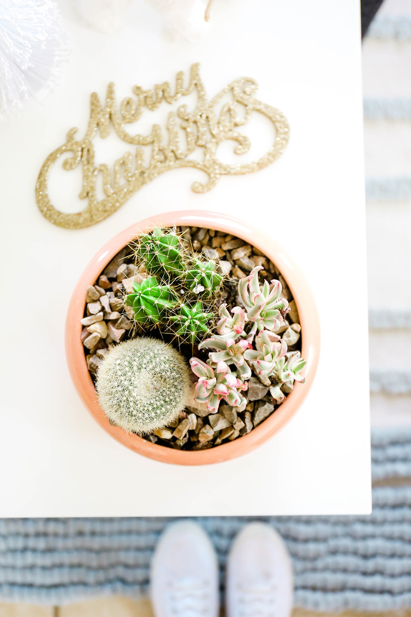 Potted succulents from Proper