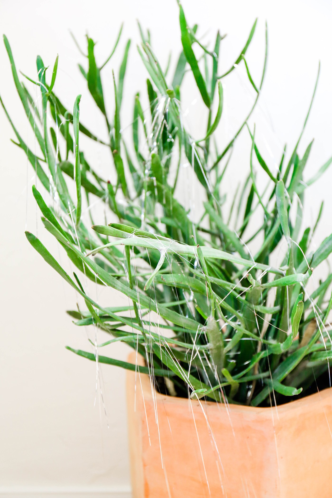 Tinsel adds festivity to potted plants