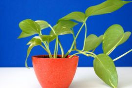 Hardy Houseplants That Double as Low-Maintenance Decor