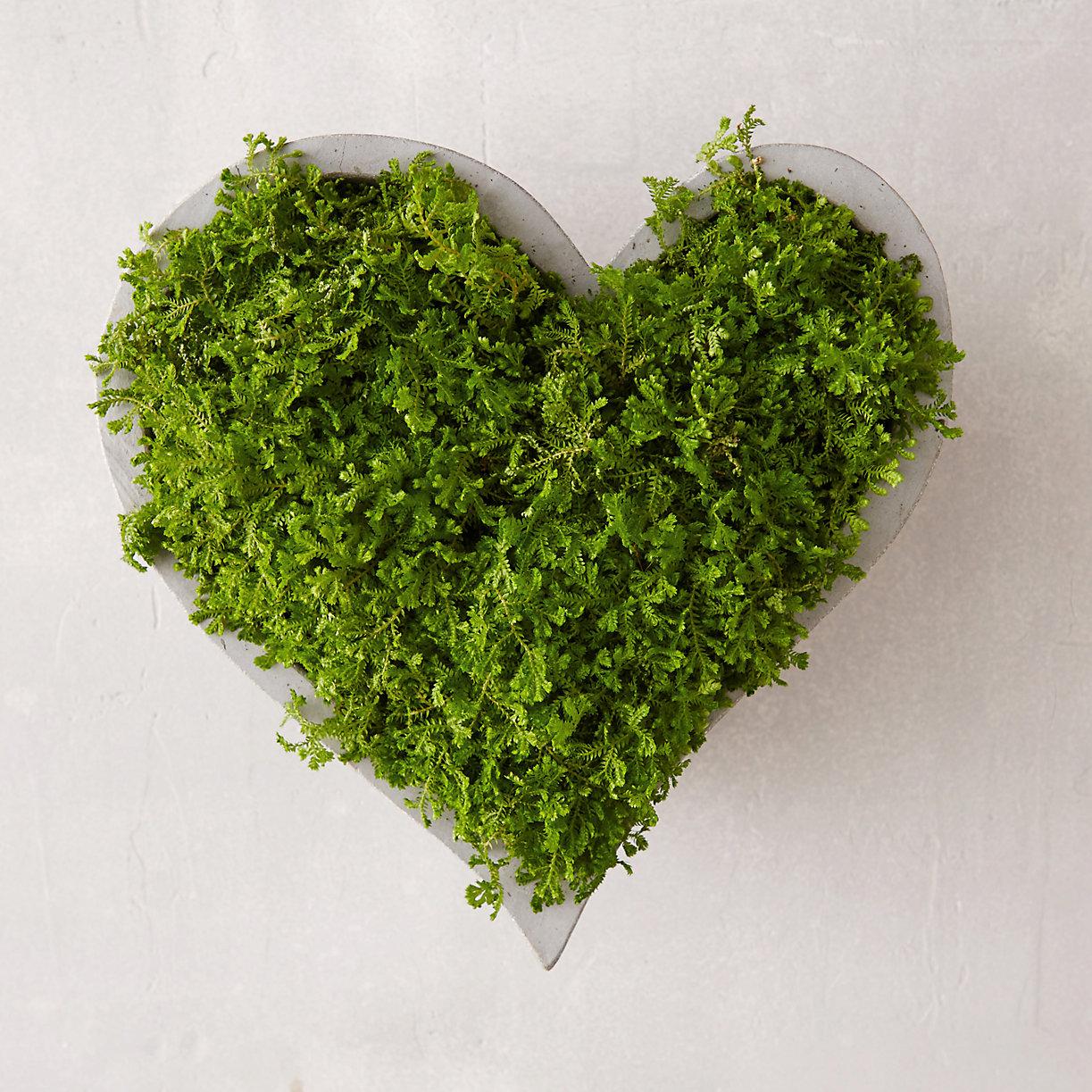 Heart-shaped planter from Terrain