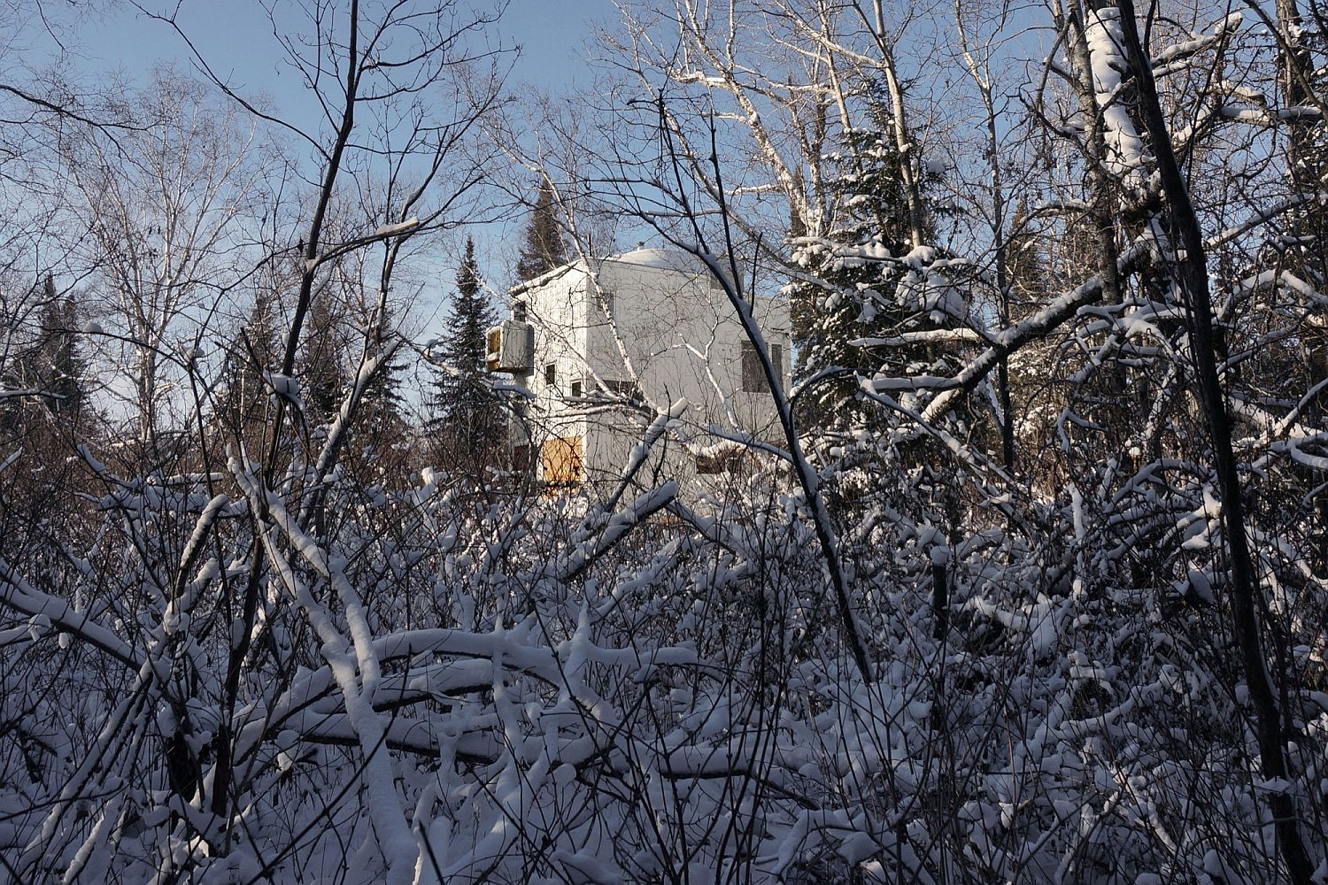 Snow-covered forest drapes the comfy modern cottage