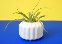 Some air plants are low maintenance 217x155 Hardy Houseplants That Double as Low Maintenance Decor