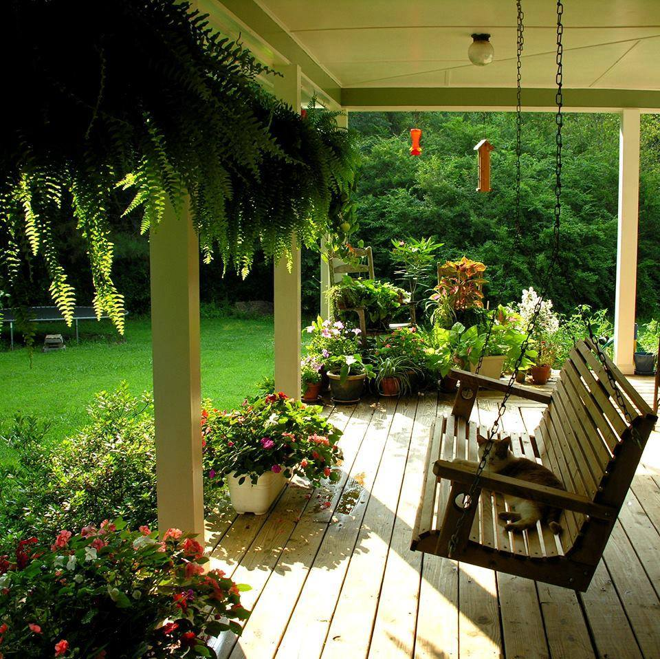 A simple wooden swing on a porch surrounded by greenery