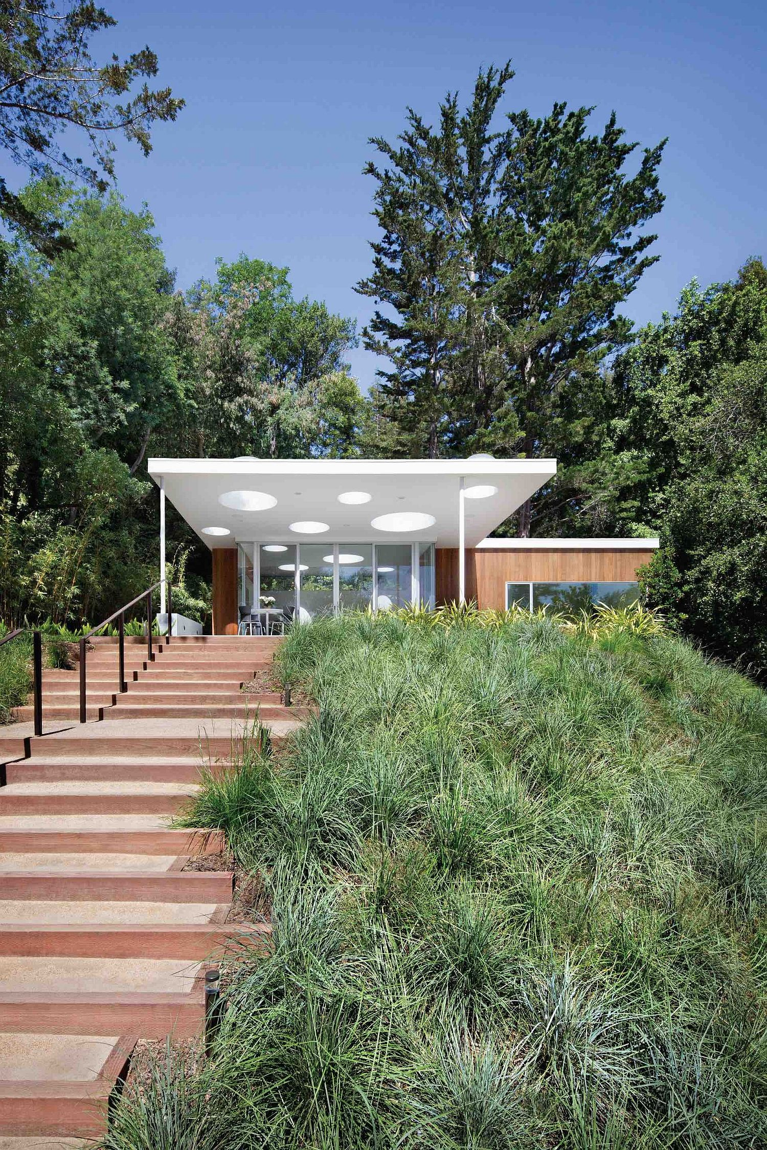 Cedar-and-redwood-trees-along-with-lush-green-vegetation-surround-the-contemporary-guesthouse