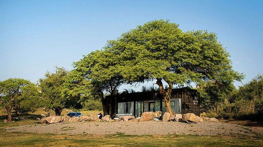 Two large trees provide natural shade to the shipping container sales office