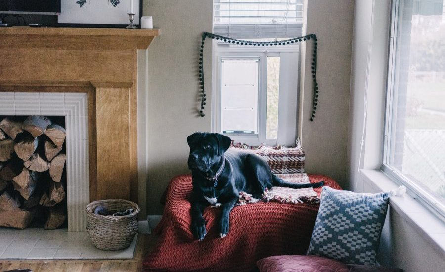 A cozy dog nook set up in the corner of the room