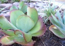 Colorful succulent in a raised flowerbed 217x155 10 Ways to Make the Most of Your Outdoor Space