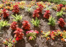 Flowerbed-filled-with-colorful-plants-217x155