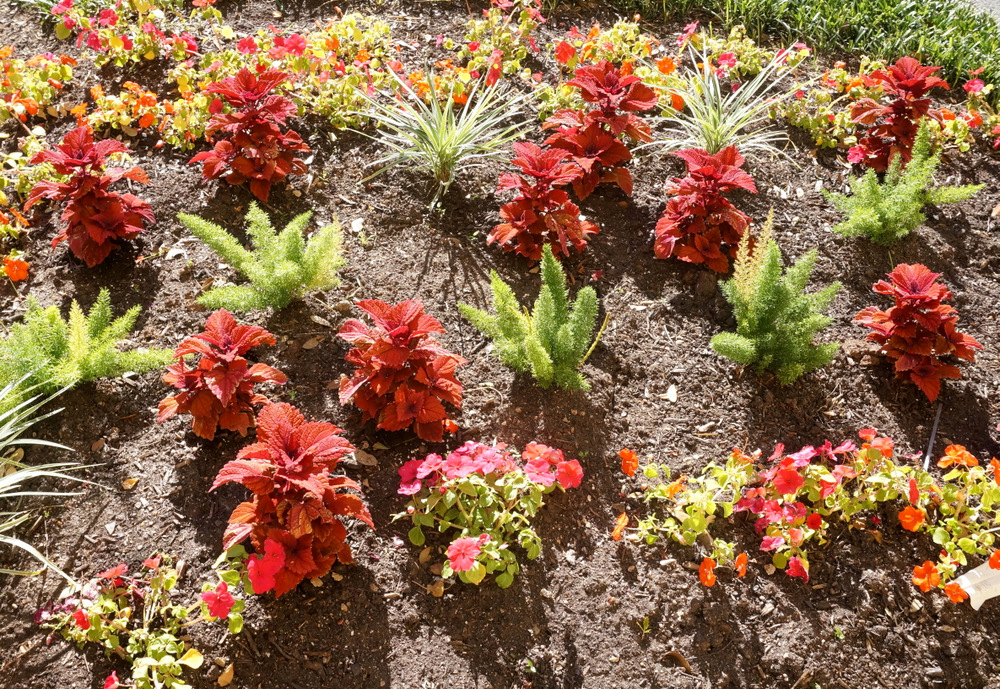 Flowerbed filled with colorful plants