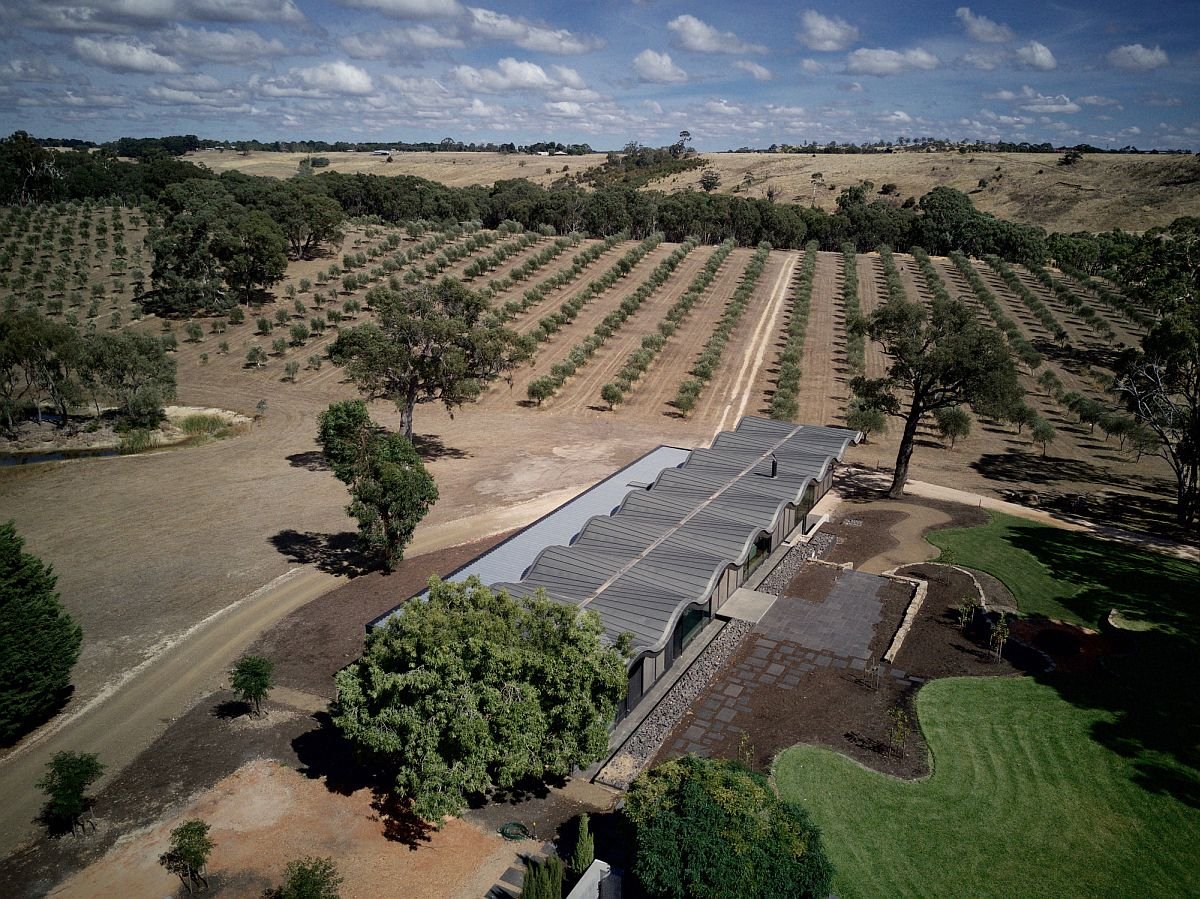 Olive grove and curated landscape around the Aussie home