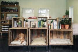 Pet Owner's Delight: Beautiful Dog Nooks That Add To Your Interior