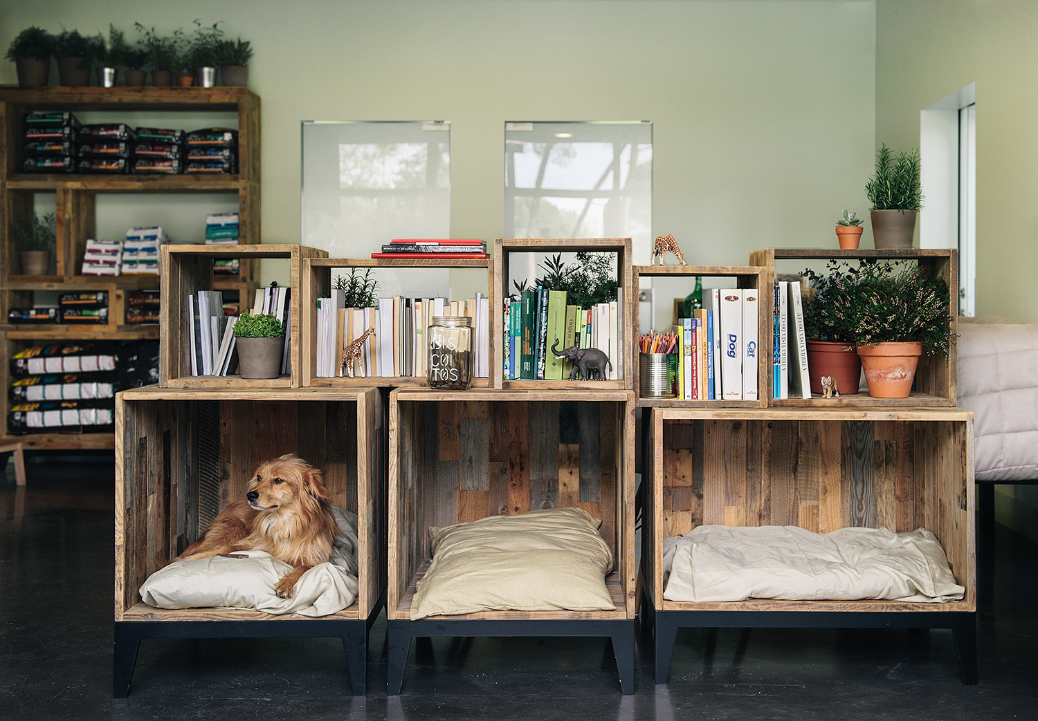 Wooden crates as comfy dog beds and rustic decor pieces