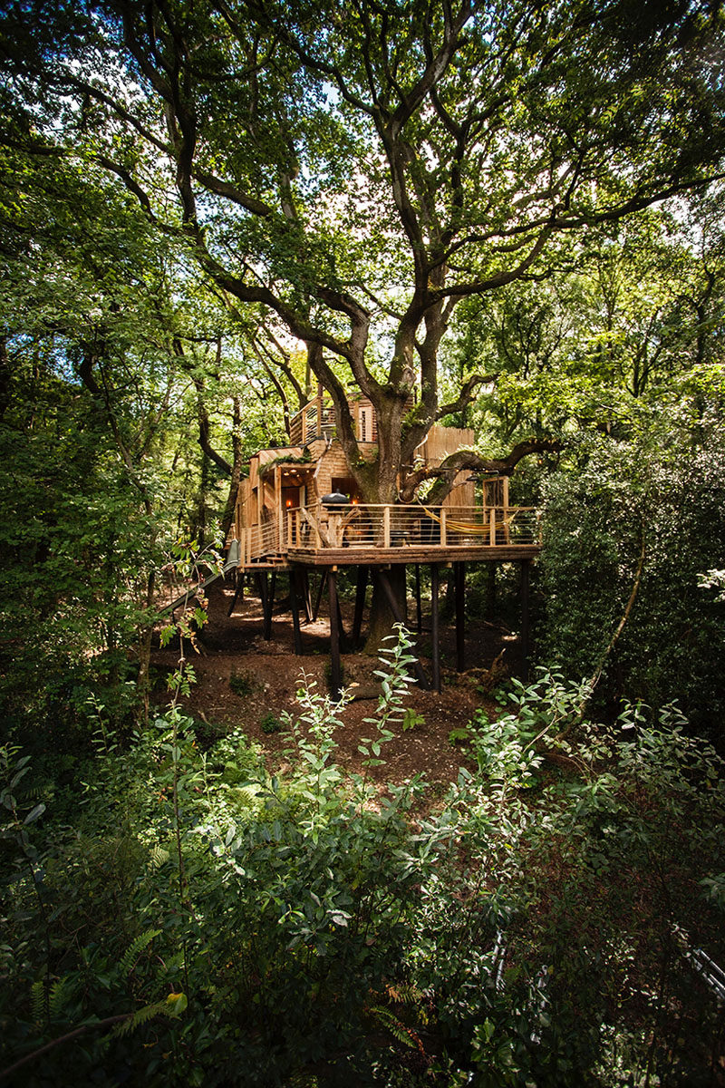 A big treehouse hidden deep within the forest