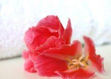 A-vibrant-flower-217x155