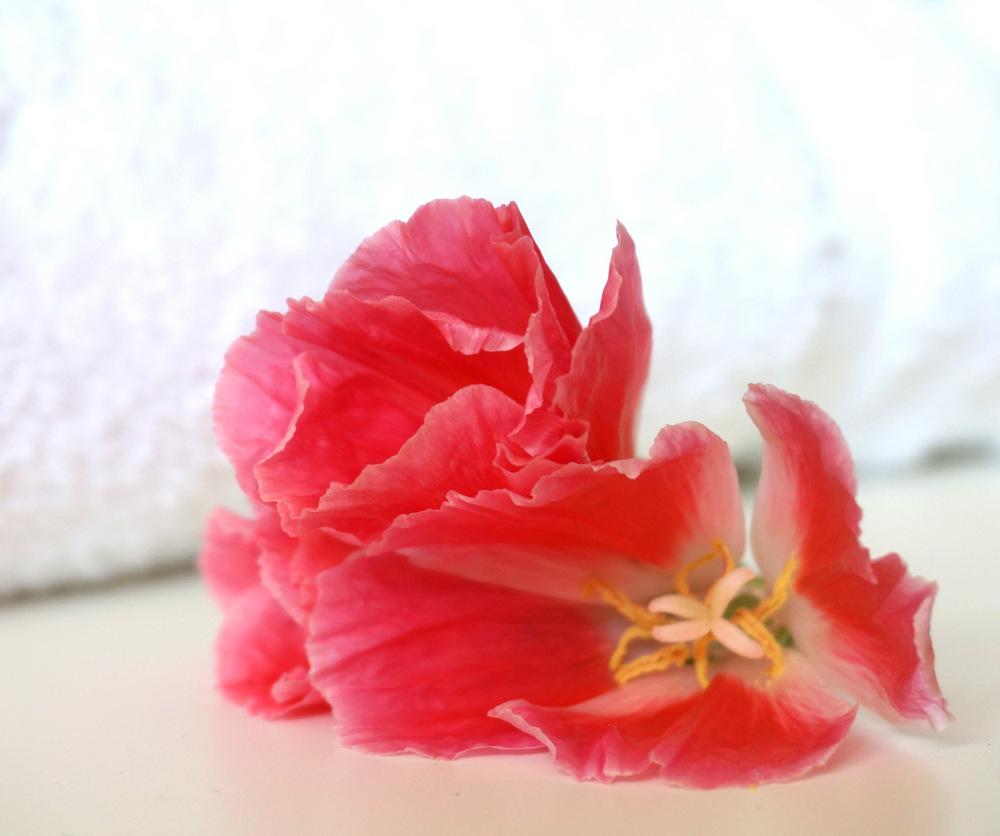 A vibrant flower