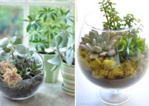 An-array-of-low-budget-terrariums-to-decorate-the-kitchen-with-217x155