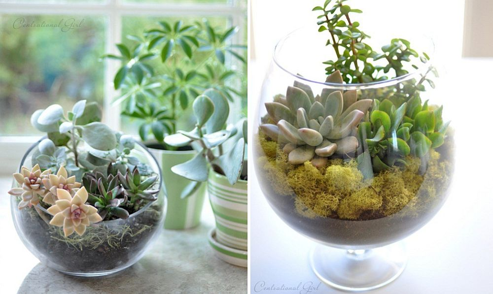 An array of low-budget terrariums to decorate the kitchen with