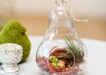 Simple-and-elegant-glass-terrarium-217x155