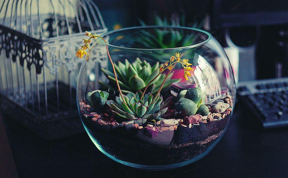 Stunning DIY terrarium idea for the modern home